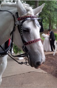 Wedding Horse and Carriage Belmont NC